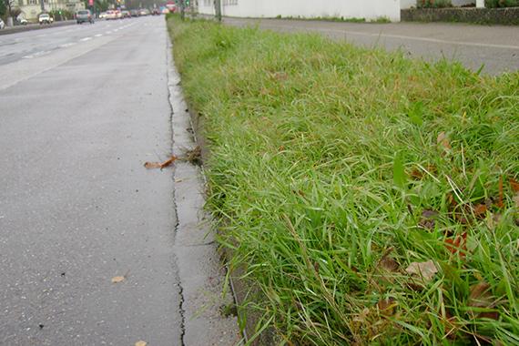 Straßenabschnitt mit Wildkrautbewuchs